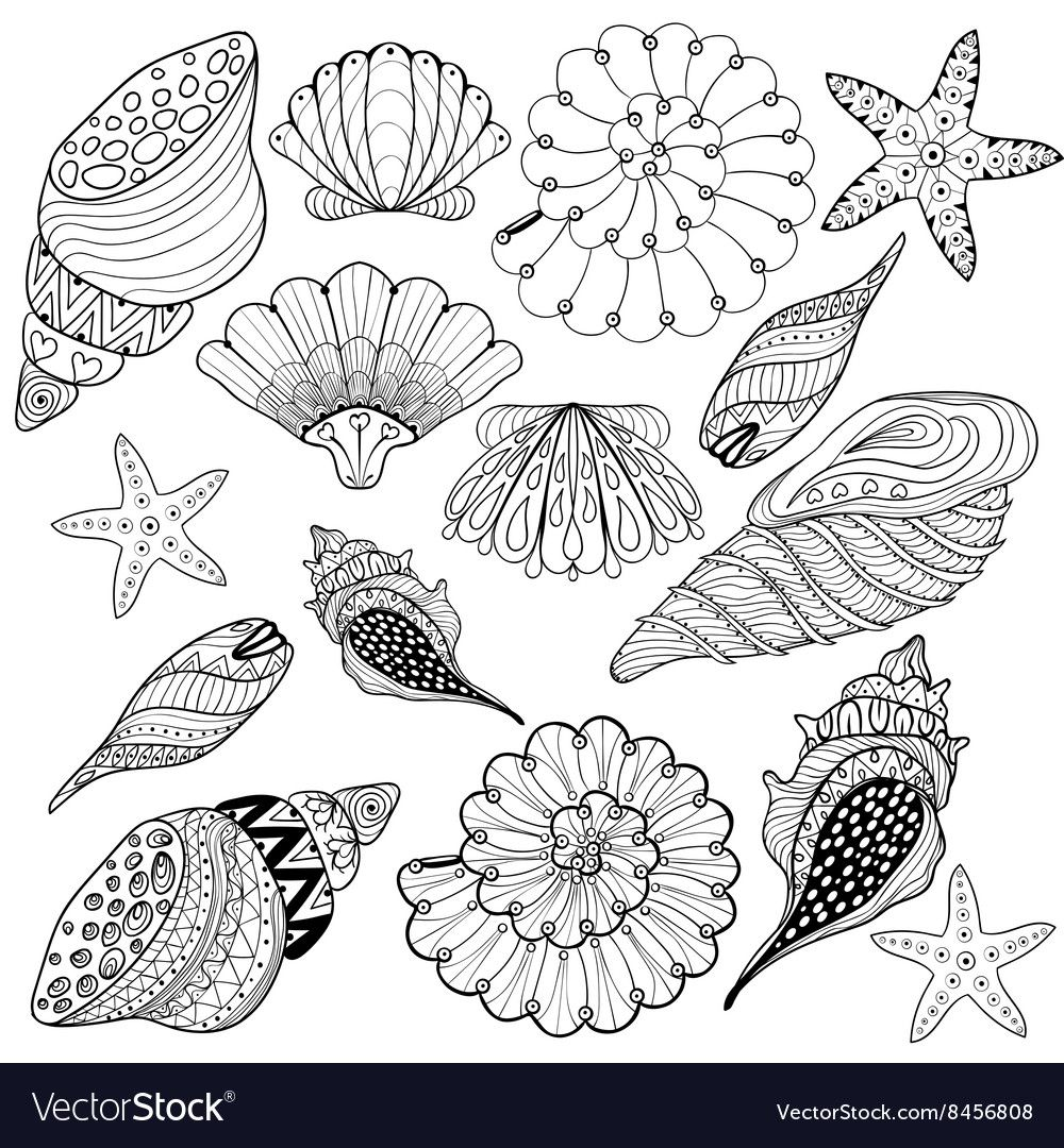Set Shells Zentangle Seashells For Adult Vector Image On In 2020