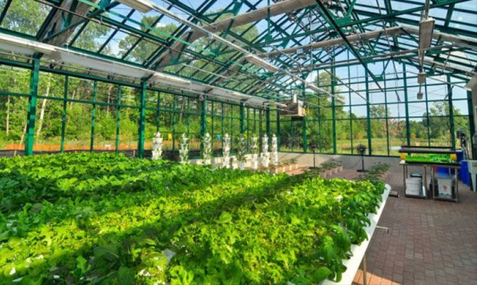 Hospital-based greenhouse produces healthy food for patients while reducing foods costs.