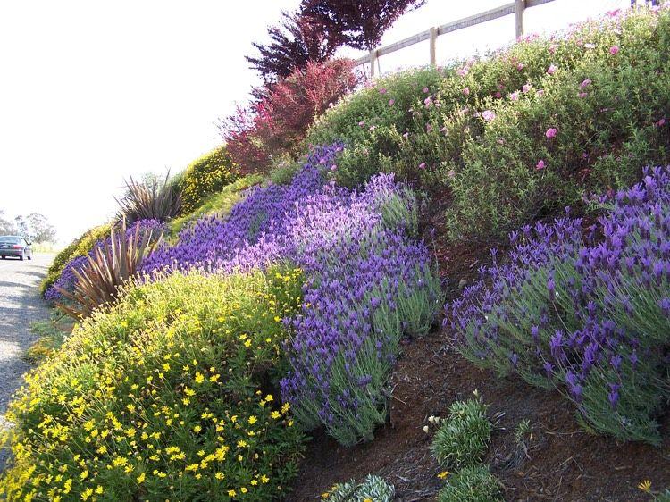 hangbepflanzung planen welche bodendecker eignen sich