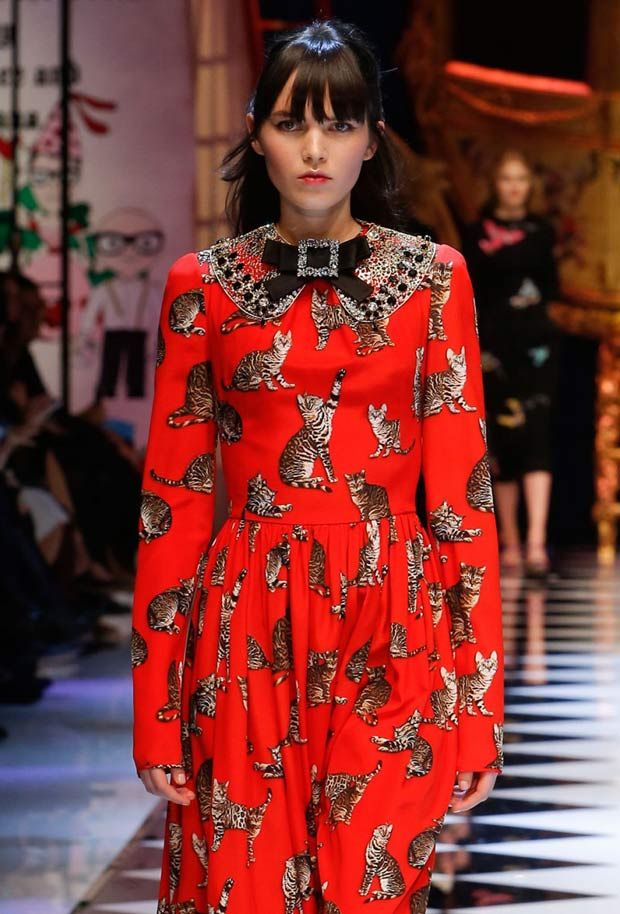 14aebaac D&G cat prints on dresses - Bengal Cats On The Catwalk At Dolce & Gabbana's