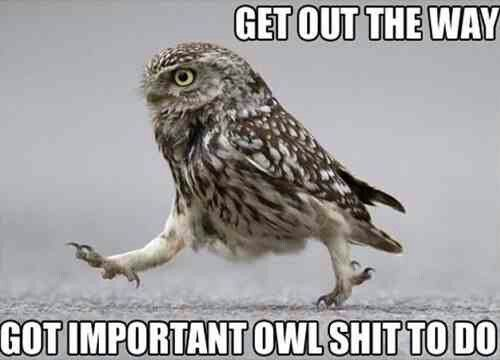 Love this #owl meme
