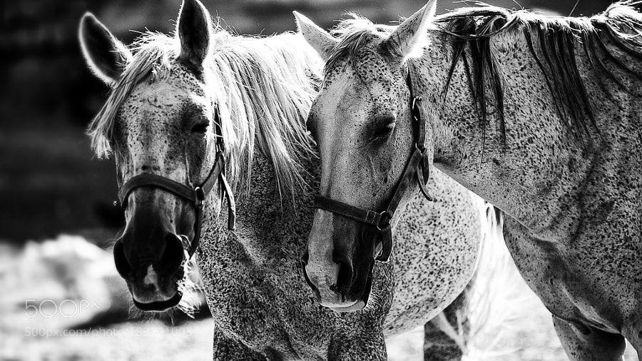 Pferde-2 by ugurse