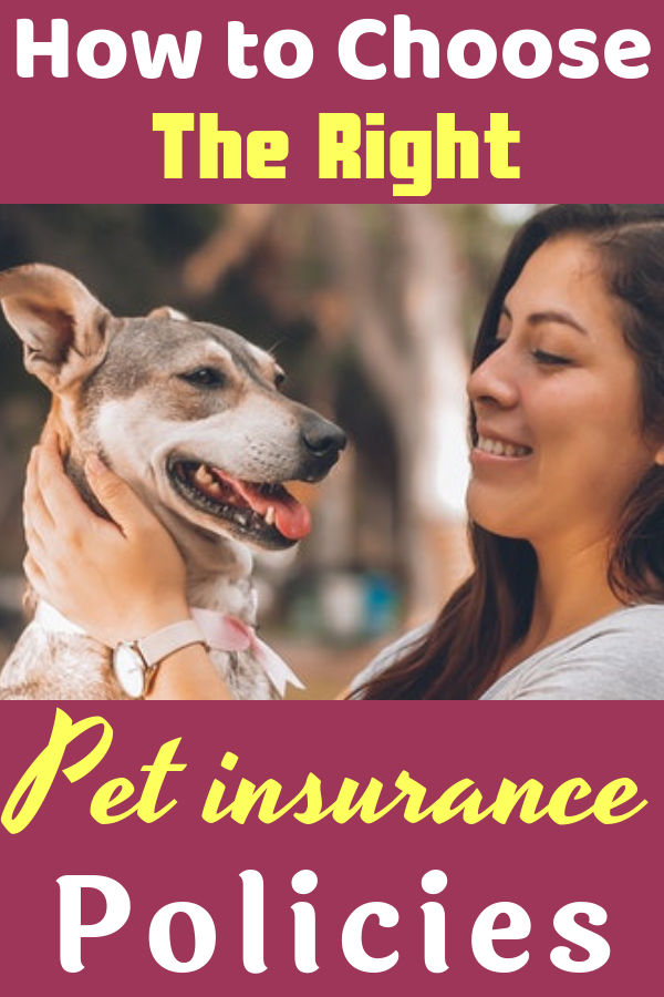 Read This Useful Article To Discover How To Choose The Right Pet Insurance Policies Pet Insurance Dogs Pet Insurance Dogs Pet Insurance Best Health Insurance