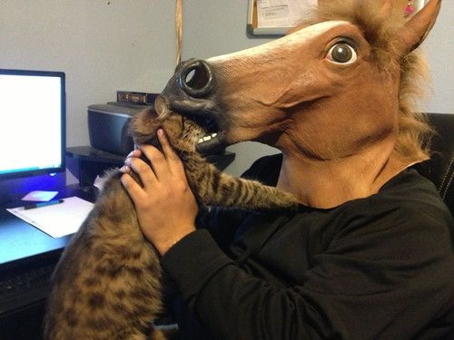 The 11 Best Ways To Wear A Horse Mask Fun Things Horse