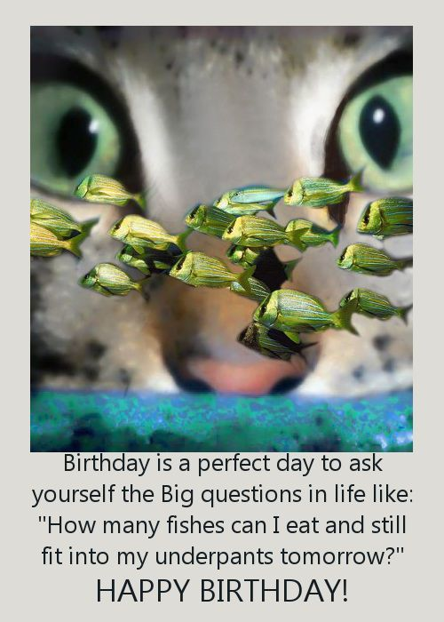 Funny Greeting Card With Cat Birthday Pinterest