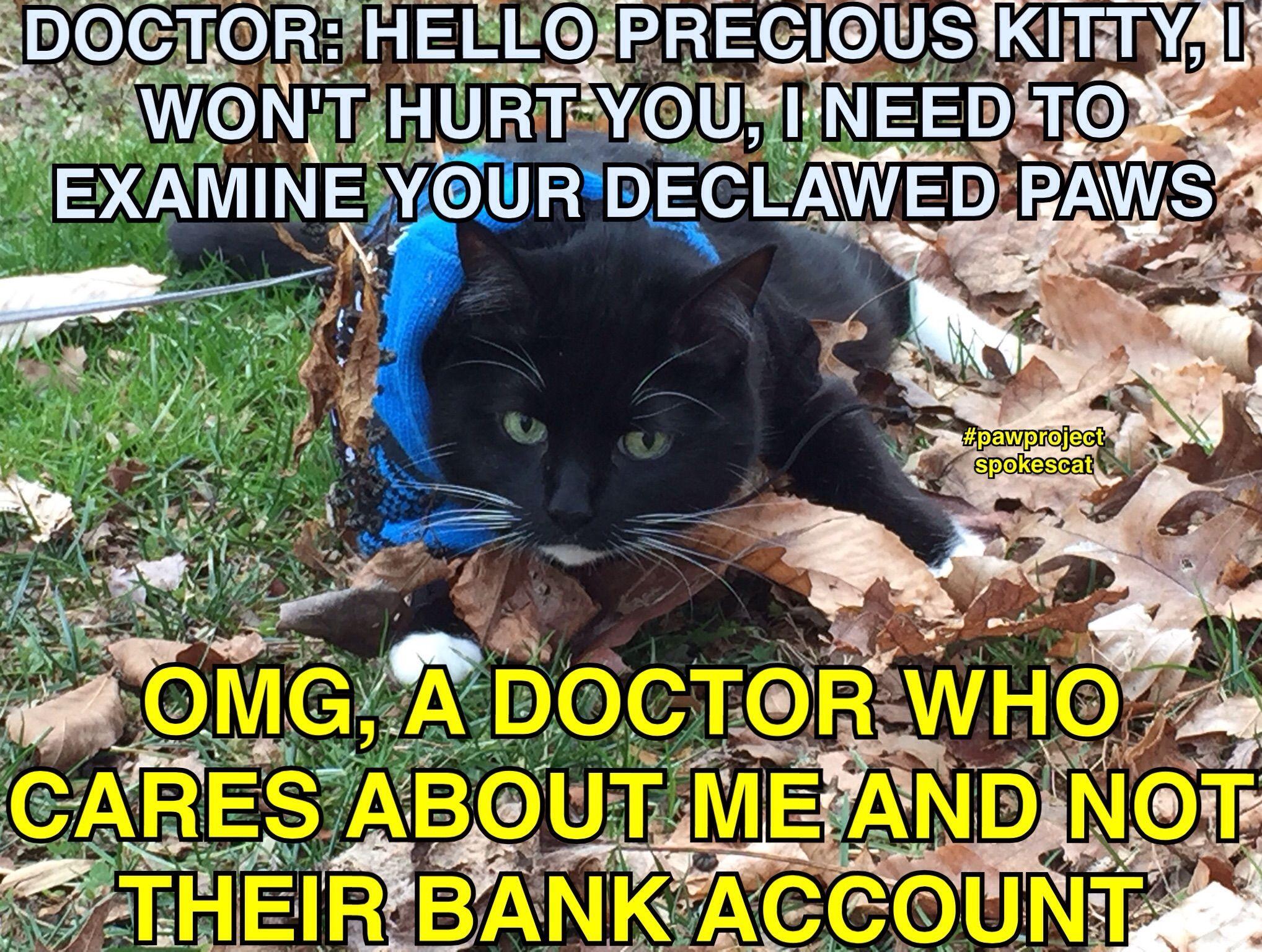 God Help Those Cats Who Suffer Please Please Help End Declawing Amen Vet Student Vet Med Vet School