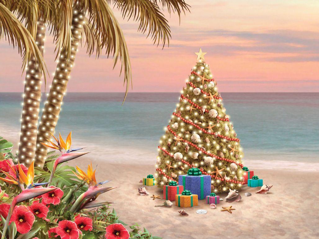 Weihnachtsbilder Neujahrsbilder.Alan Giana Beauty And The Beach Beach Christmas Tropical