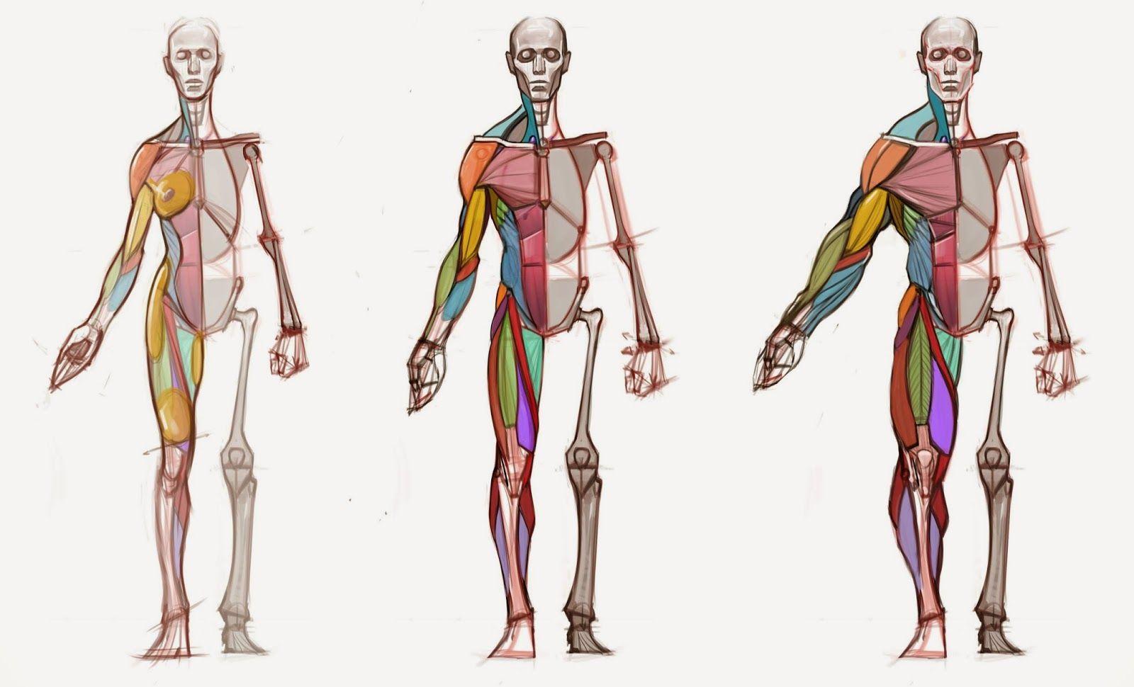 Figuredrawingfonews Body Type Diagram Anatomy Pinterest