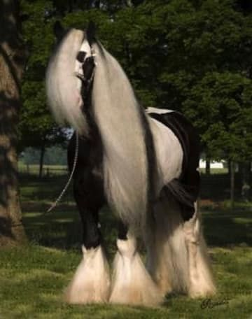 20 Horses With Better Hair Than You  7113d96b4b3