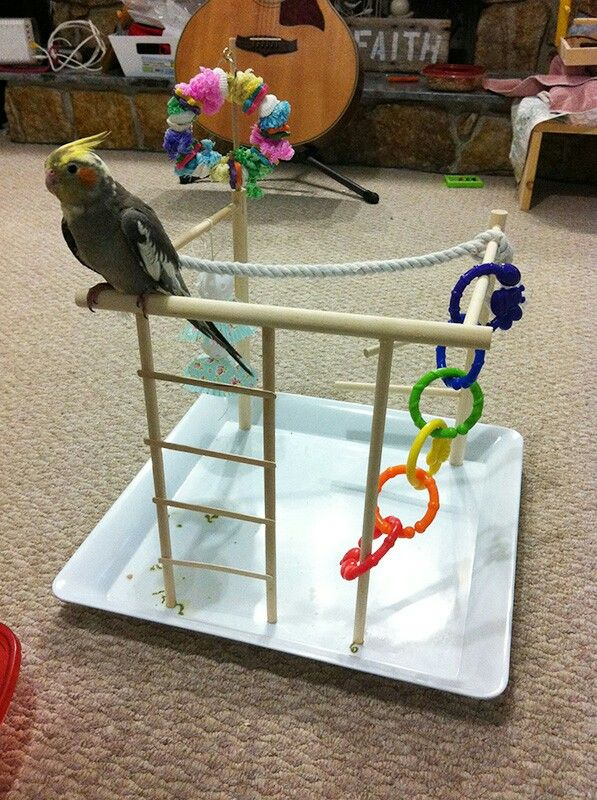 Cockatiel Diy Play Gym Diy Bird Toys Cockatiel Toys Bird