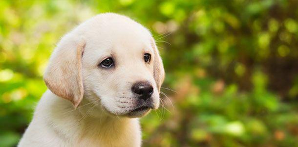 awww sweet pup. dogs dogs kleinehunde139297.jpg (610×300