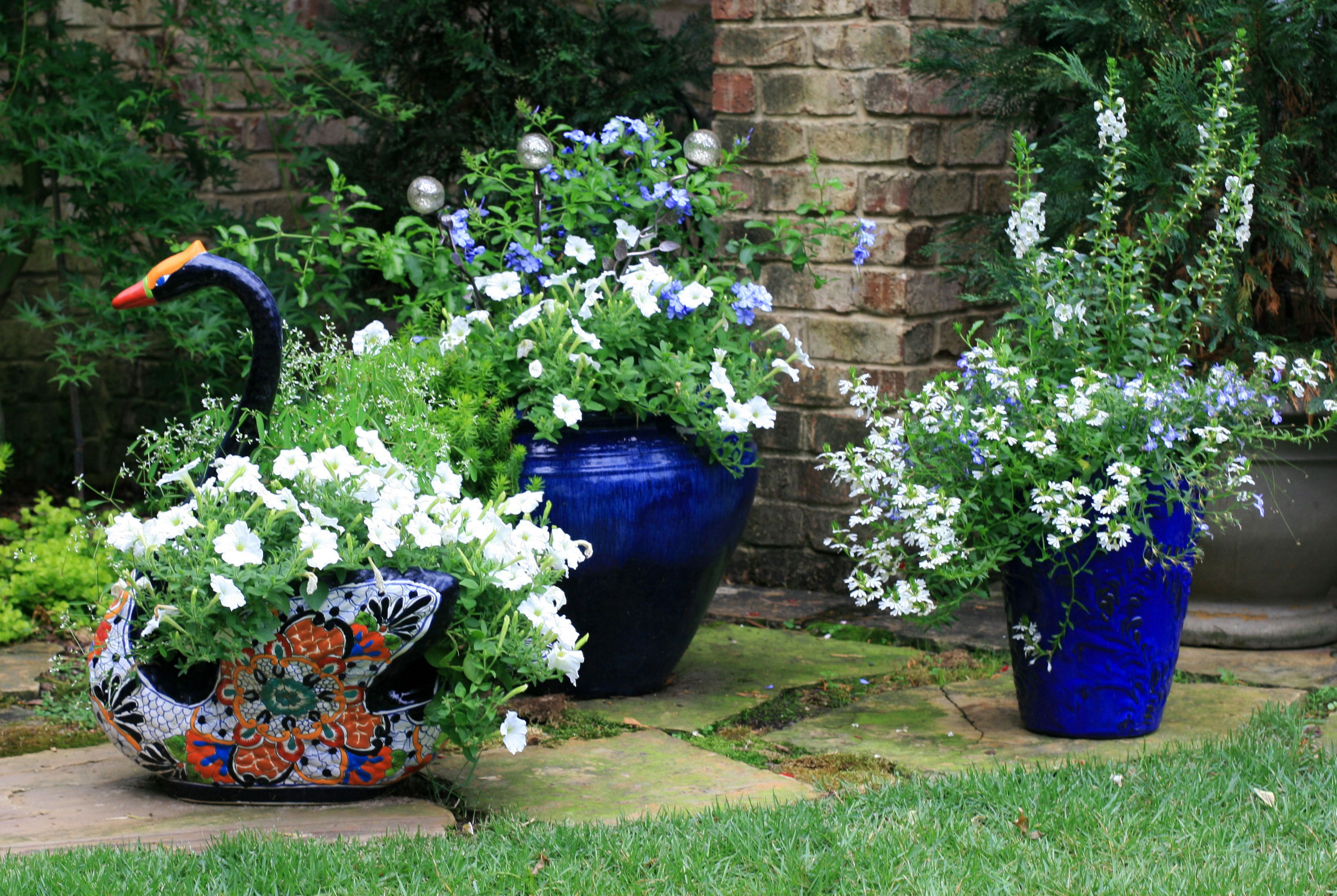 my Blue and White garden containers