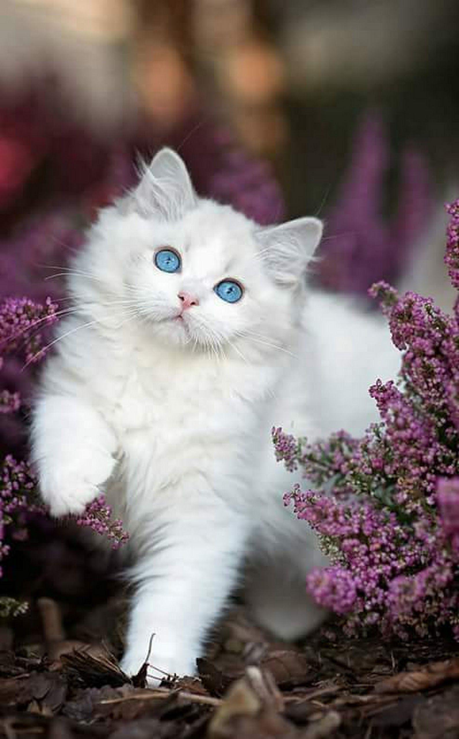 Pin Von Eva Gubik Auf Art Gallerie Tiere Weisse Katzen Und Haustiere