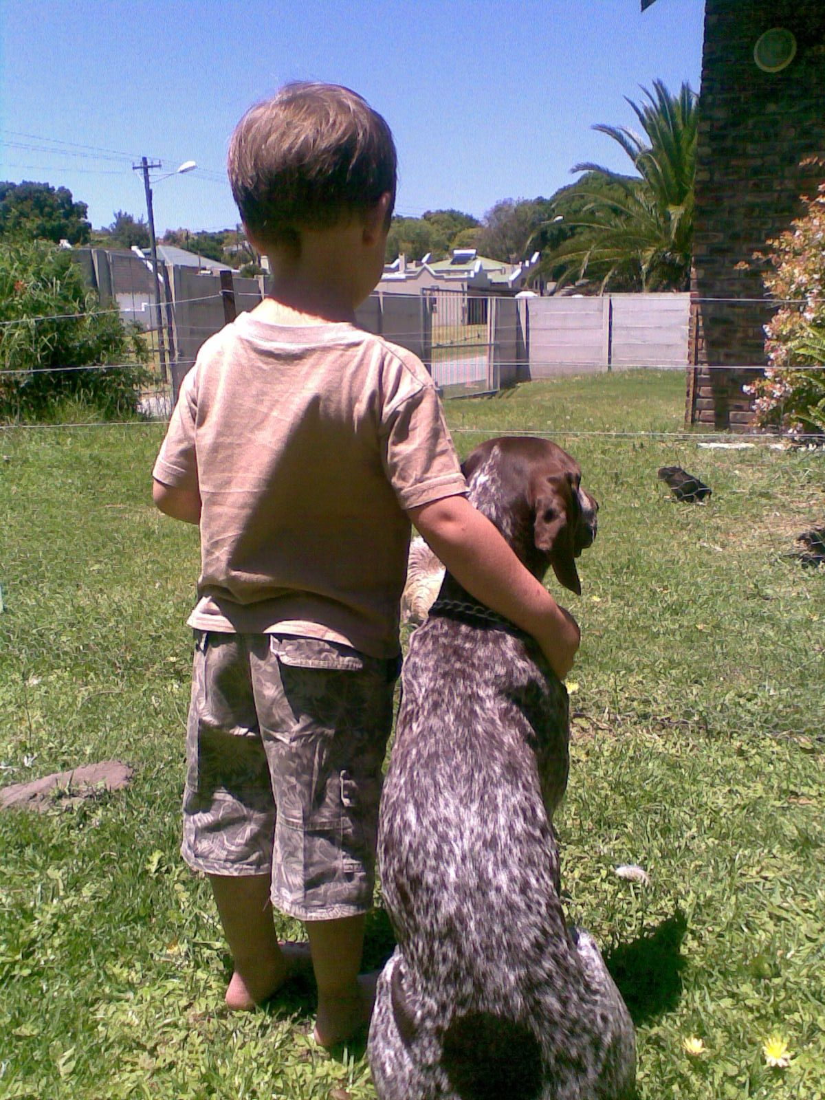 Vin The German Shorthaired Pointer One Day We Ll Farm With Chickens German Shorthaired Pointer German Shorthair Puppies And Kitties