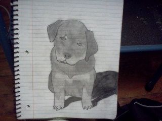 My friend sent me a picture of her puppy to draw..