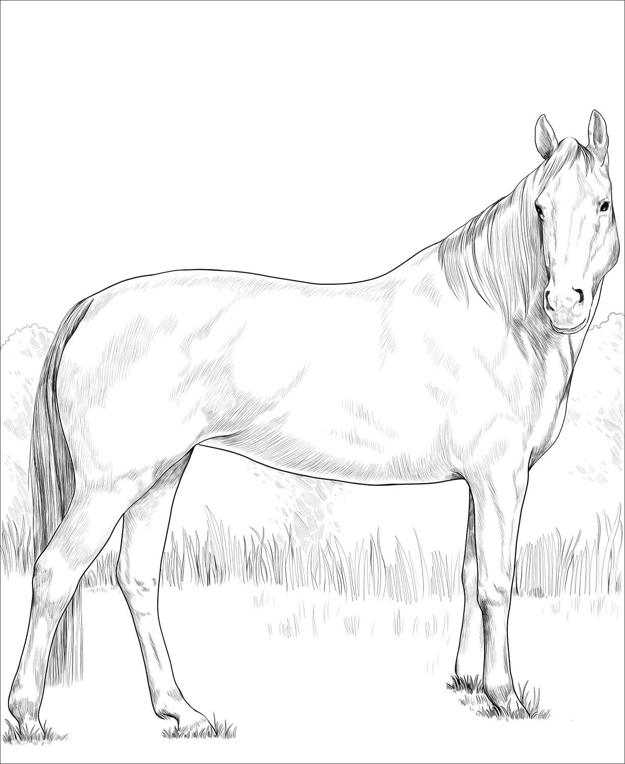 Warmblood Mare Coloring Page Horse Coloring Pages Horse Coloring Animal Coloring Pages