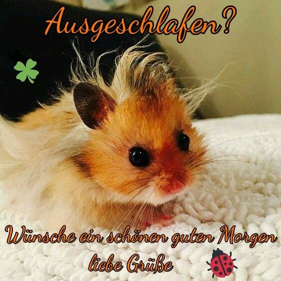 Pin Von Waltraut Sell Auf Guten Morgen Guten Morgen Bilder Tiere Ausgestopftes Tier Susseste Haustiere