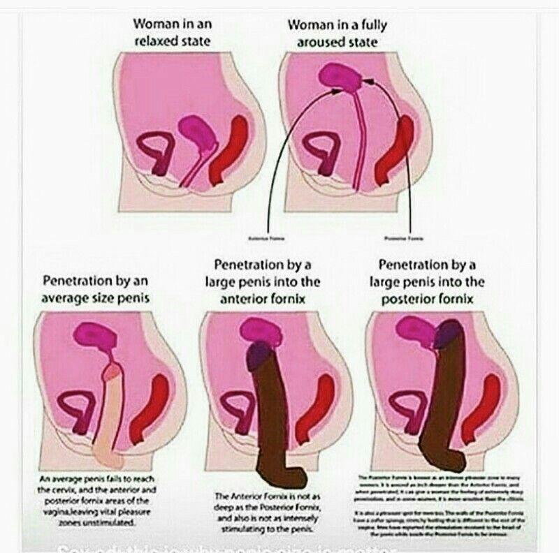 Erotic fact wife