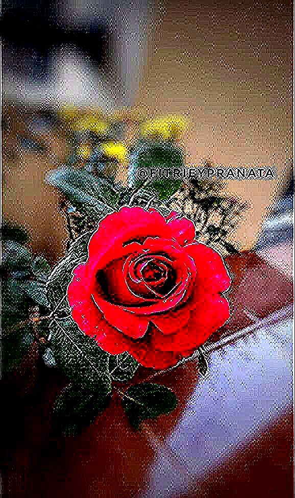 Bahagia itu sederhana, liat si Merah gini aja hati sudah bahagia dan senang pake bangeett 🤗😍🌹 #plants #plantsofinstagram #plantstyle #plant #instagarden #instaflower #flowerstagram #instataman ##hdlgardenterrace #gardendecor #gardenstyle #flowers #pojok_favorit #tamandiaries #tamanminimalis #mawarmerah #instamawar #instagramable #floweraddict #plantslover #flowerloversofinstagram #flowerlovers #nature #naturephotography #naturephotography