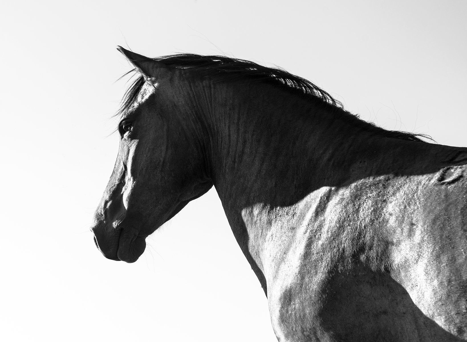 Black and white photographic print of a beautiful black ...