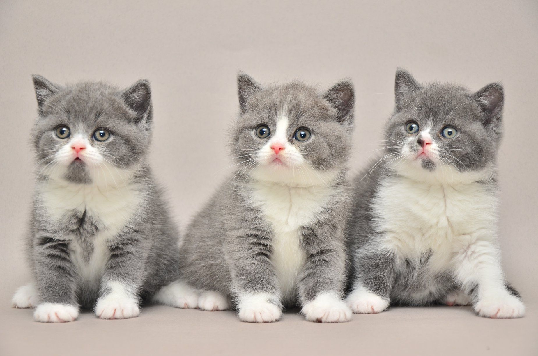 Triplets Cute Baby Cats Cute Cats Kittens Cutest