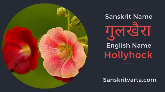 50 List Of Flowers Name In Sanskrit Language And Hindi With Pictures Sanskrit Learnsanskrit Sanskr In 2020 Sanskrit Beautiful Flower Names Flowers Name In English