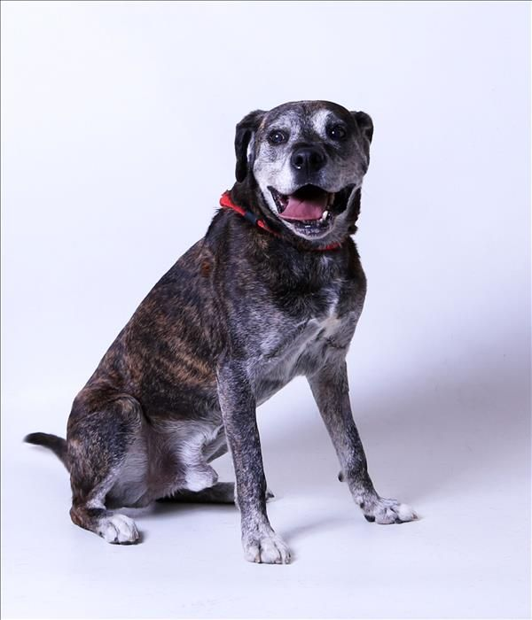 Franklin County Dog Shelter Adoption Center Columbus Oh Franklin Is A 10yr Old Male Labrador Mix Shelter Dogs Dogs Labrador Mix
