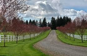 Image Result For What Are The Best Trees To Line A Driveway Circle Driveway Landscaping Driveway Landscaping Tree Lined Driveway