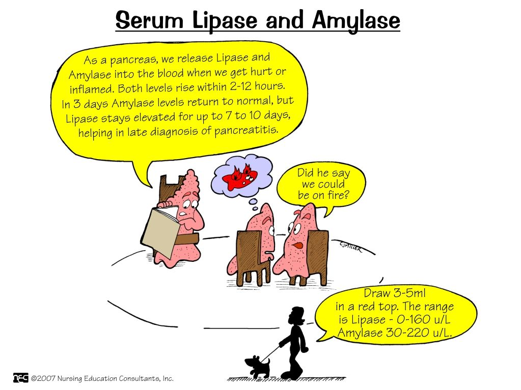 serum lipase and amylase | nursing mnemonics and tips | labs, Skeleton