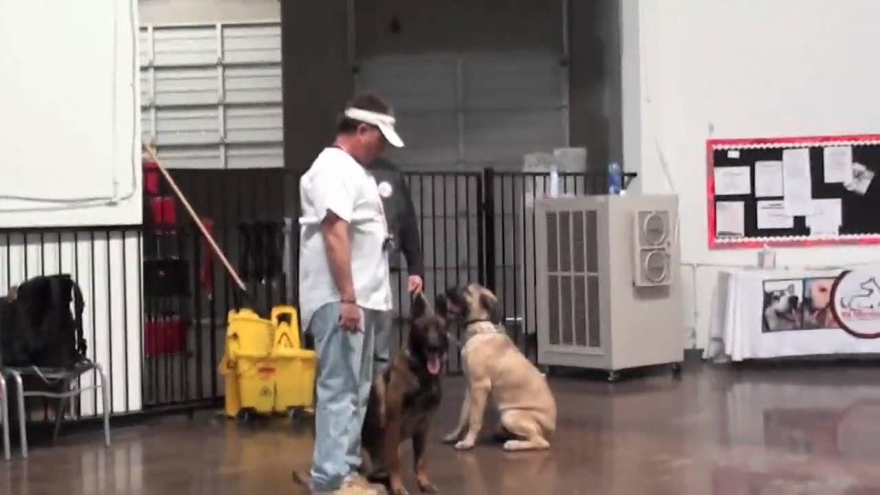 Sit Means Sit Fastest Dog Training Method Part 2 Dog Training
