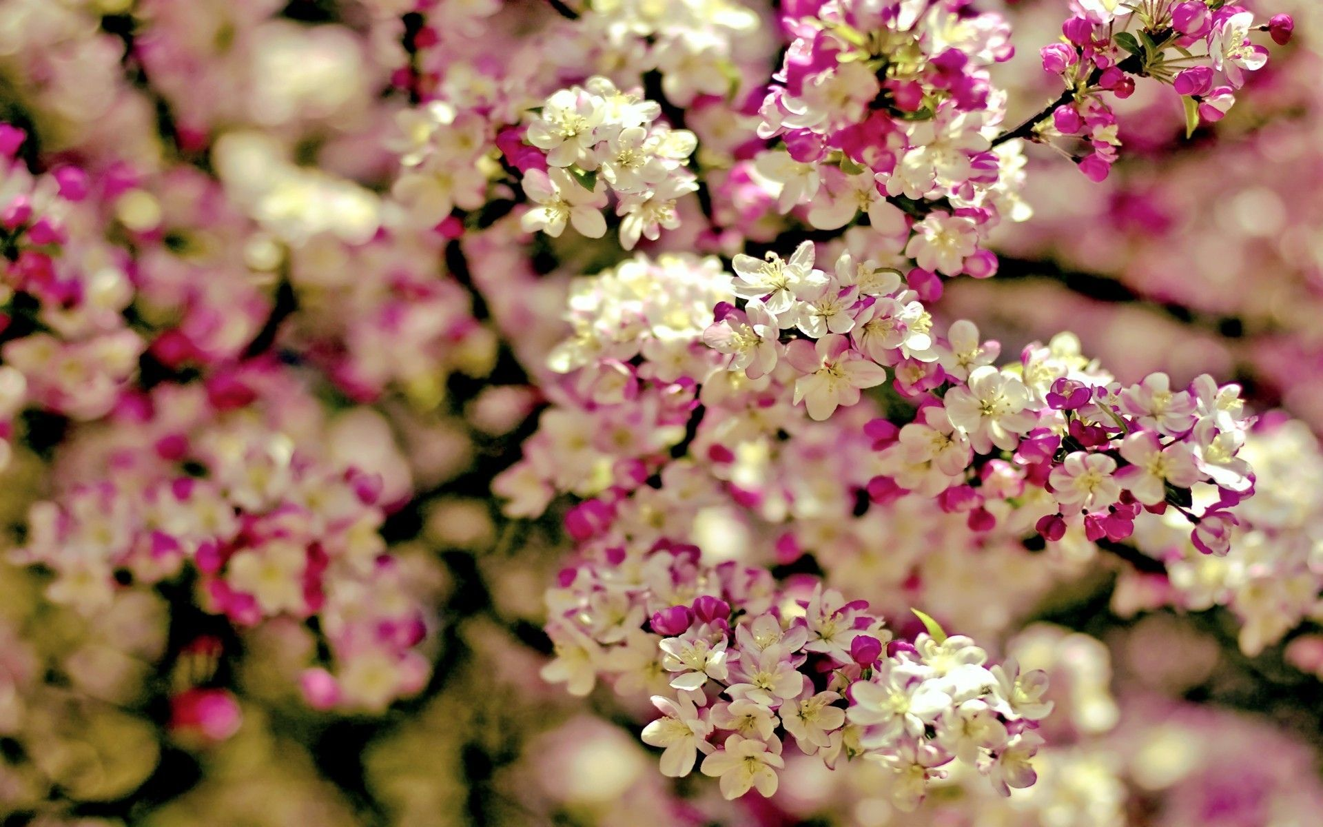 Spring Flowers Background Wallpaper Spring Tree Flowers Categories