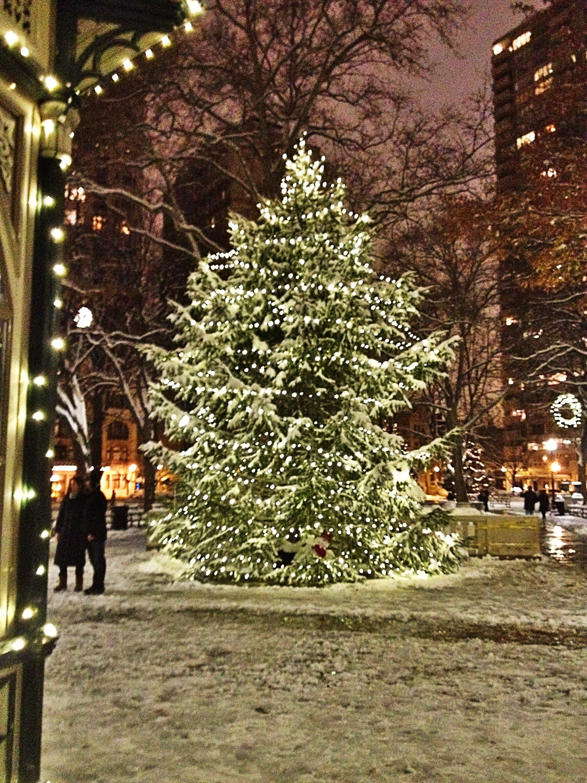 The Christmas Tree at Rittenhouse Square