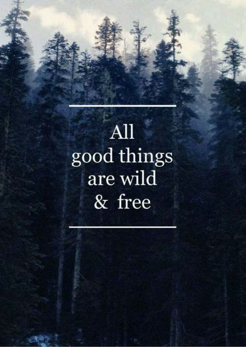 Inspirational Quotes Nature Tumblr Forest Picturesms Www