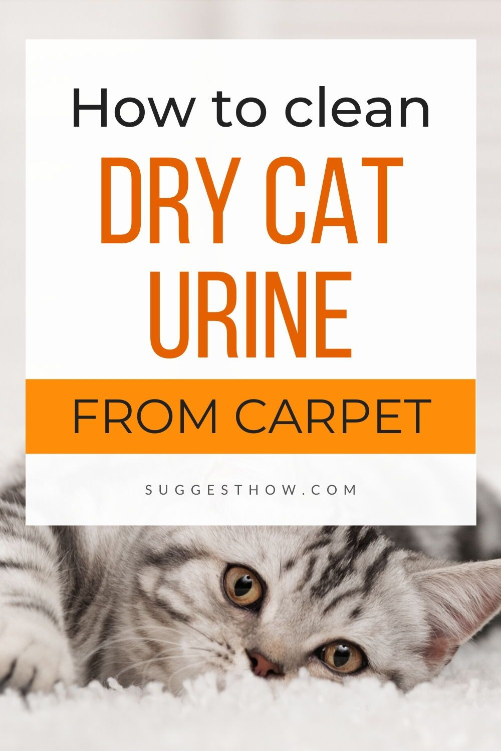 How to Clean Dried Cat Urine from Carpet – 3 Easy Methods ...