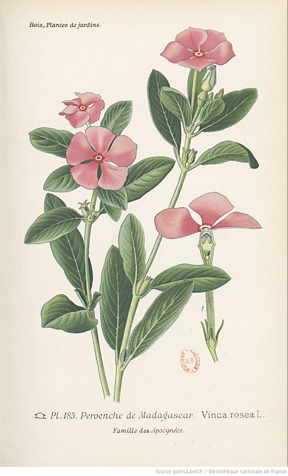 plante exotique nard