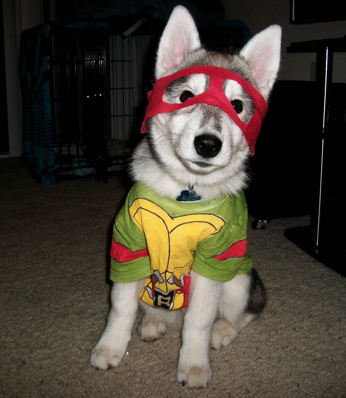 Teenage Mutant Ninja Husky Puppy Halloween Costumes Pet