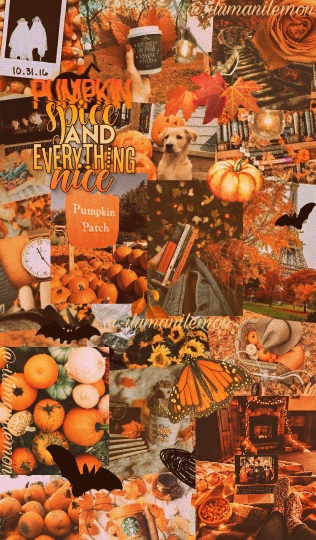 Fall Wallpaper Aesthetic Fall Wallpaper Iphone Wallpaper Fall Iphone Wallpaper Photography