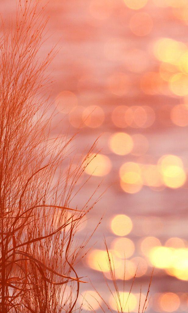 Tinnacriss — Sunset on the Chesapeake Bay by rivadock4