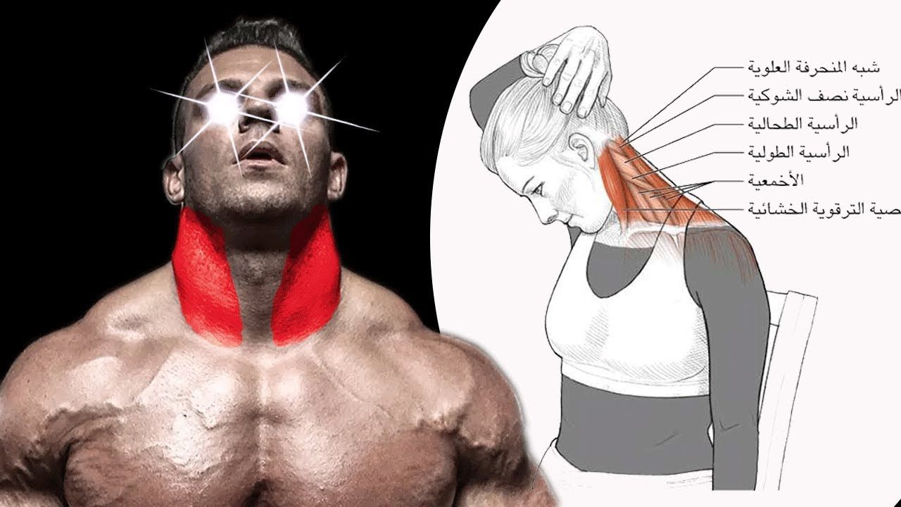 New Video By مهووس عضلات كمال الاجسام On Youtube تمارين تضخيم وتعريض الرقبة العنق واهيته لعبي كمال الاجسام Neck Workout لهذه Neck Exercises Make It Yourself