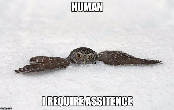 28 Memes Of Owls Behaving Like Hoomans #babyanimals