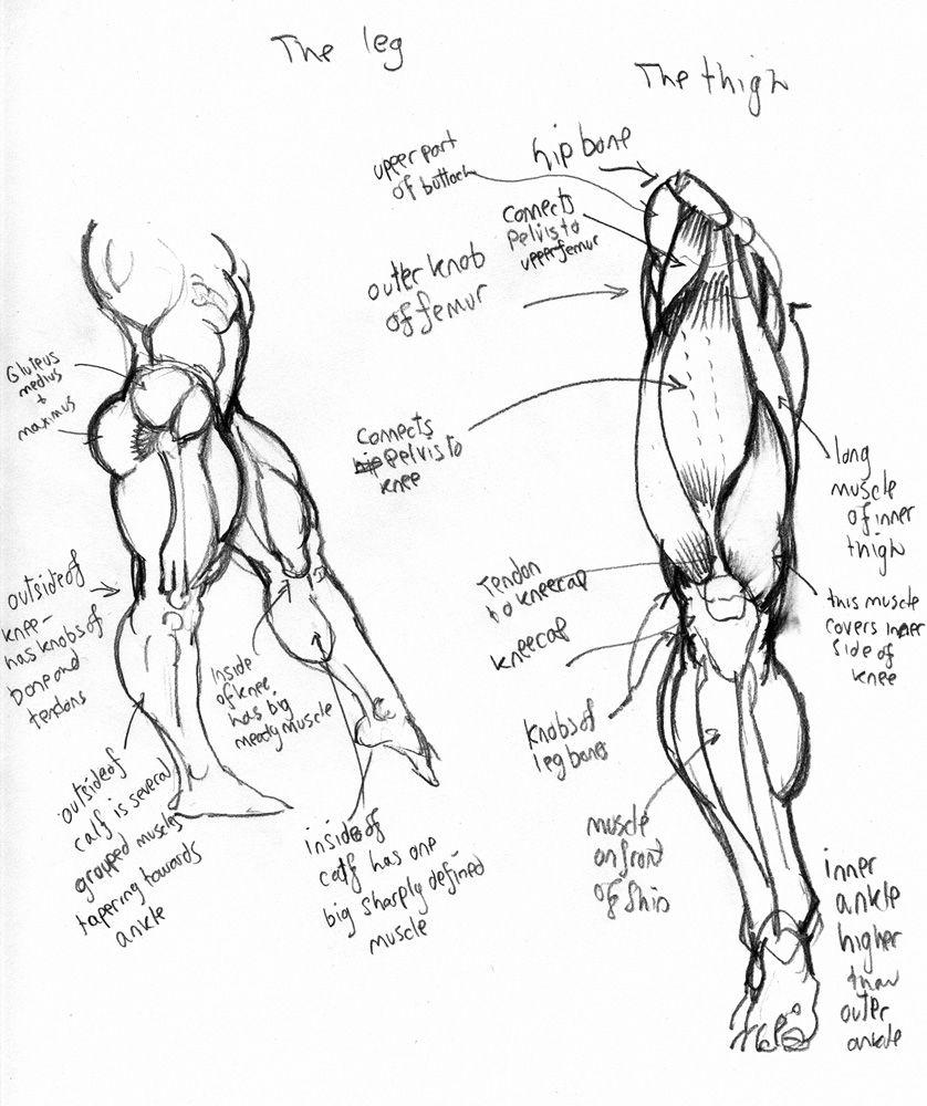anatomy: leg by Jebriodo on DeviantArt   comicart   Pinterest ...