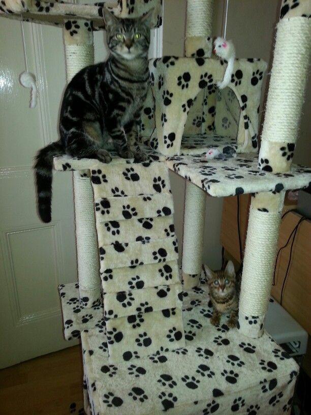 Ollie & Orla in their activity centre
