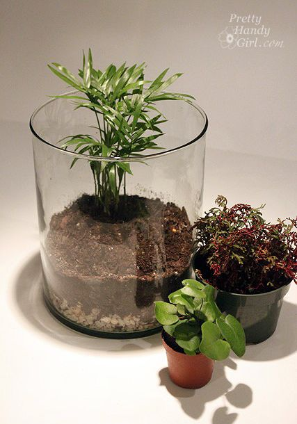 Build your own terrarium for cheap.
