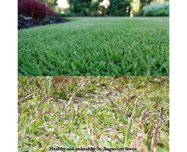 Top 10 Summer Lawn Care Tips How Many Can You Check Summer Lawn Care Lawn Care Tips Lawn Care