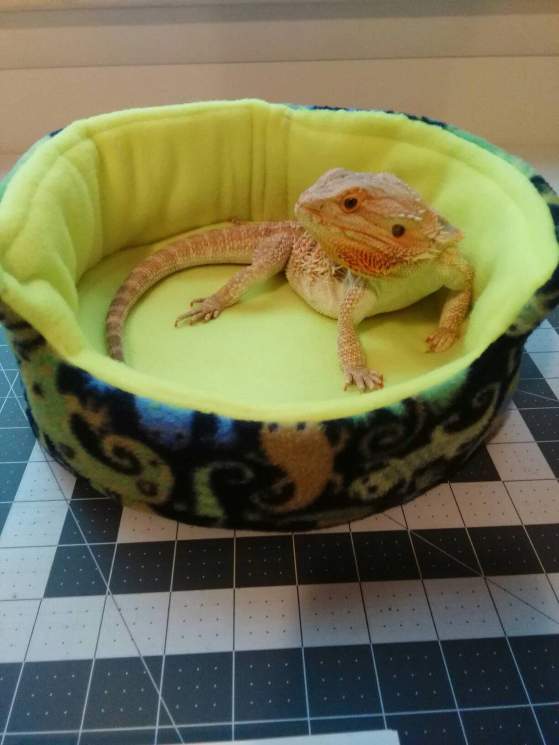 Pin by Caryln Little on Dragon in 2020 Bearded dragon