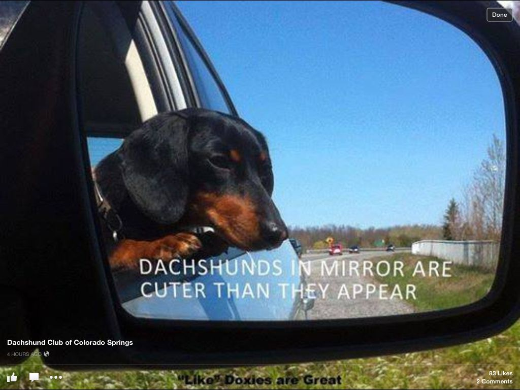 Facebook Dachshund Club Of Colorado Springs Co Crusoe The