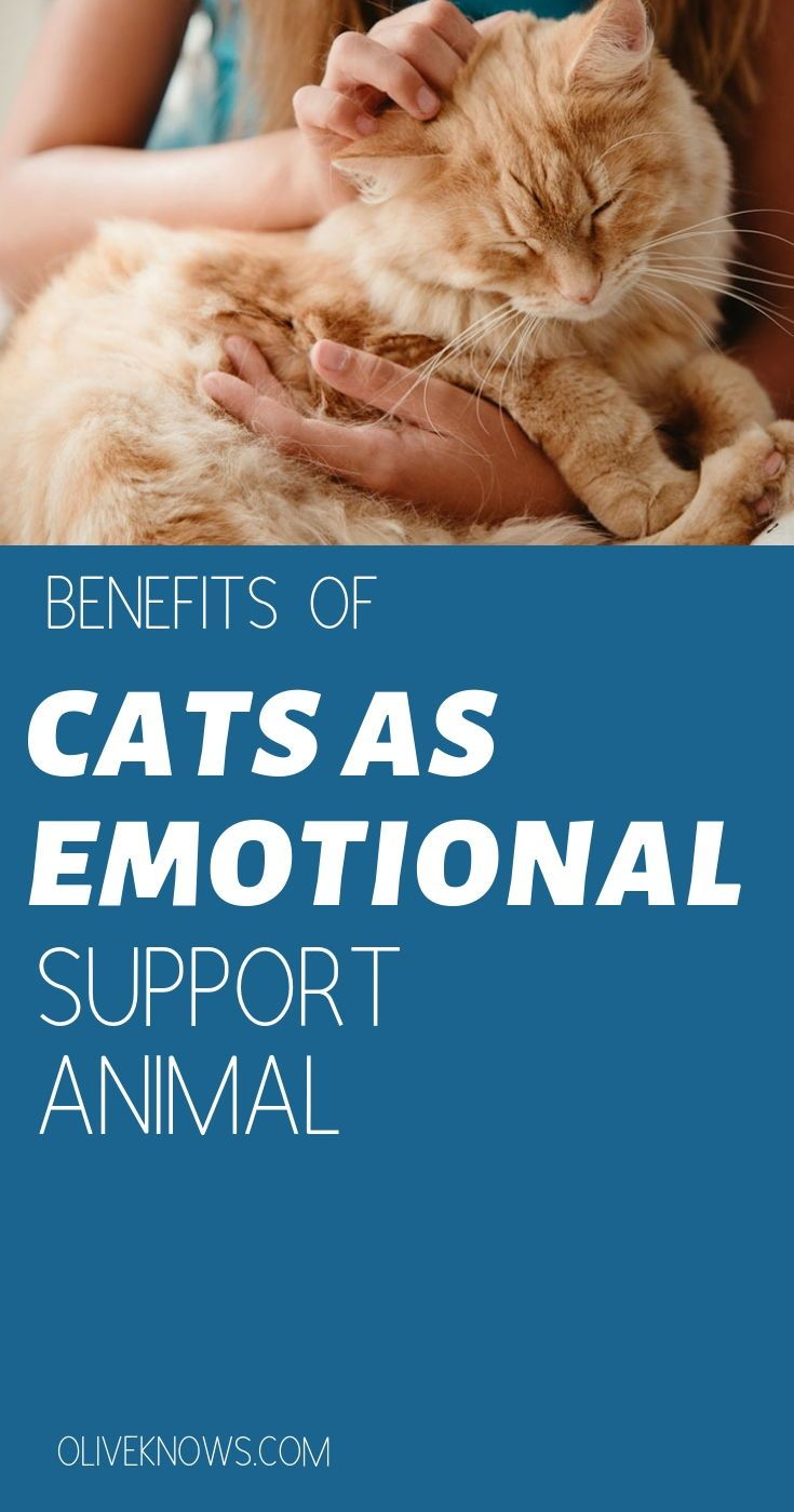 11+ Good emotional support animals images