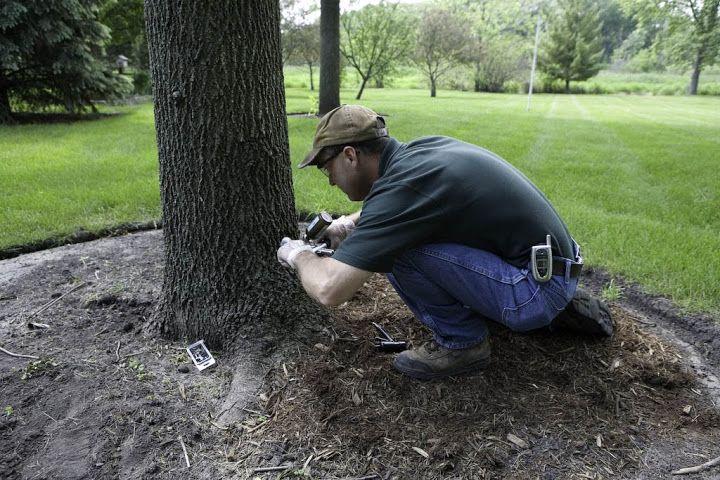 Tree Care Paul Beebe Tree care, Health care, Plant health