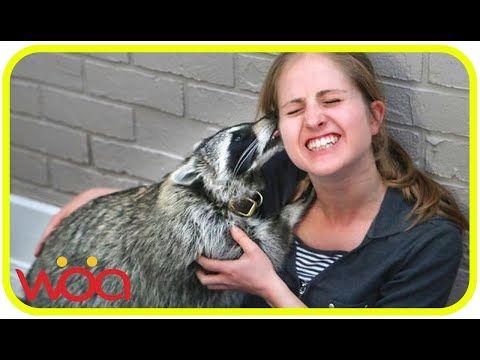 Wild Animal Express Love to Human A Wonderful Animal Human Love - YouTube