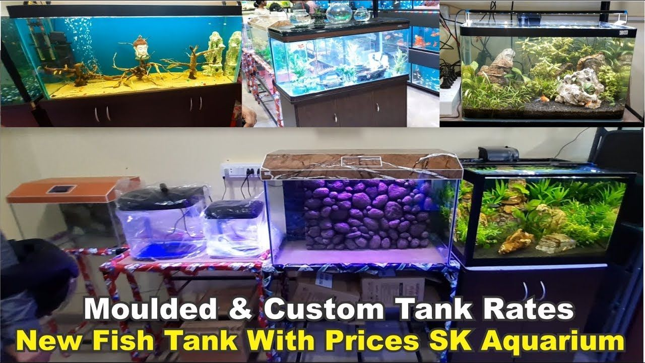 Pin On Banglaore Aquarium Store